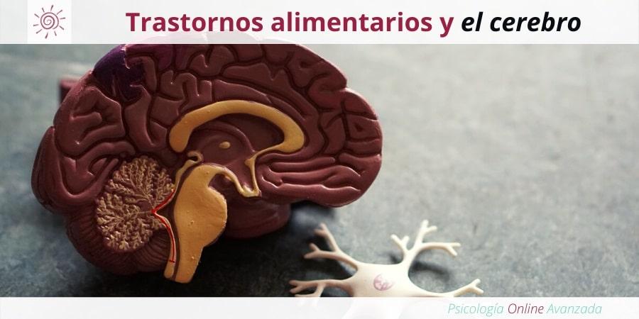 Cómo afectan los trastornos alimentarios a la neurobiología del cerebro, Mala alimentación, Alimentación, Bajo peso, Obesidad, Anorexia, Bulimia, Atracón, Anorexia Nerviosa, Purgas, Ejercicio Excesivo, Vomito Inducido, Comer en exceso.