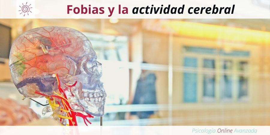 Fobias y la actividad cerebral, Tratamiento para las fobias, Miedo, Pánico, Ansiedad, Terapia online, Exposición, Dificultad para respirar, Fobias, Síntomas de las fobias