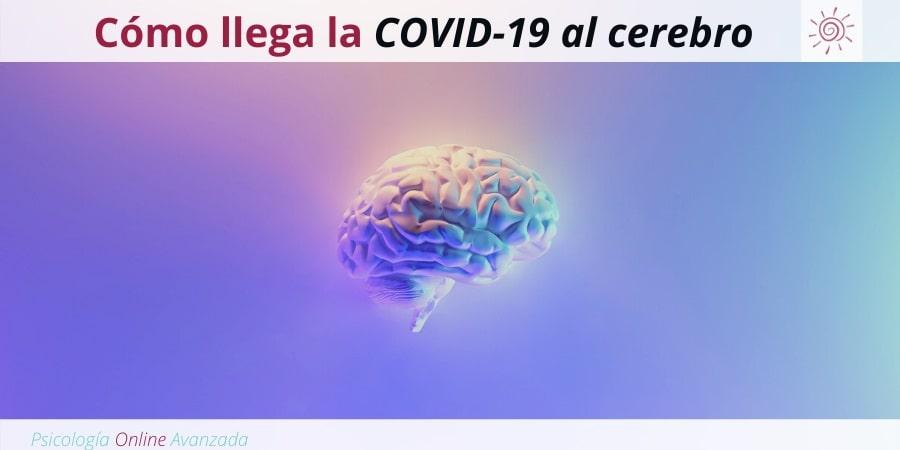 Una nueva investigación revela cómo llega la COVID-19 al cerebro, Ansiedad, Pensamiento, Técnicas de relajación, Hogar, Terapia Online.